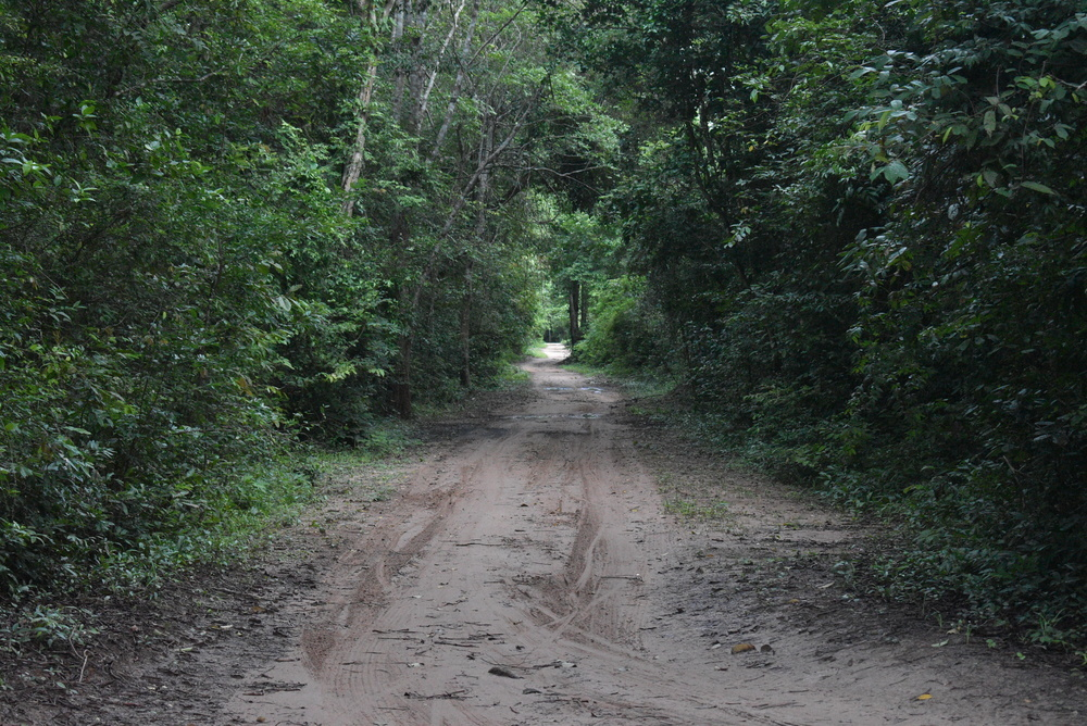 A deep jungle trail that is quite well-maintained.