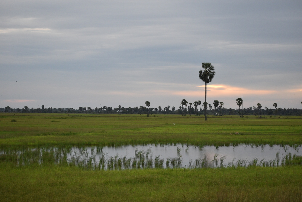 Wonderful sunset just elevates this seemingly infinite stretch of rice paddies scenery.