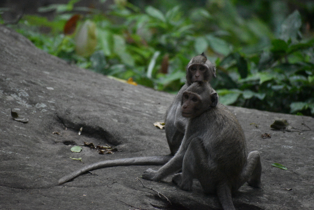 Young macaques with their curious looks.