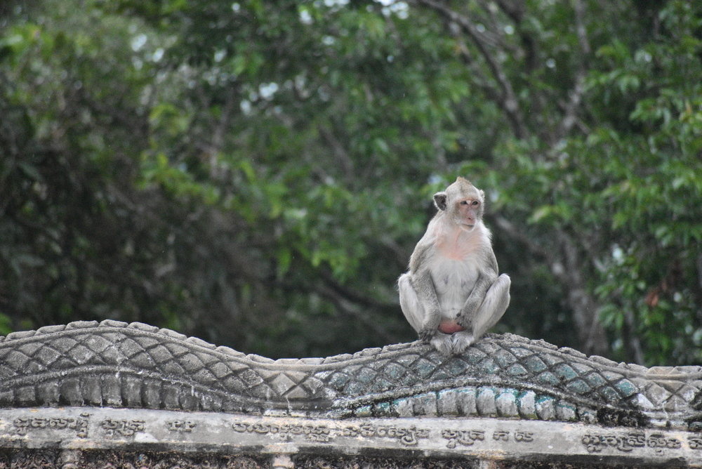 A small macaque awaiting guests at the entrance.
