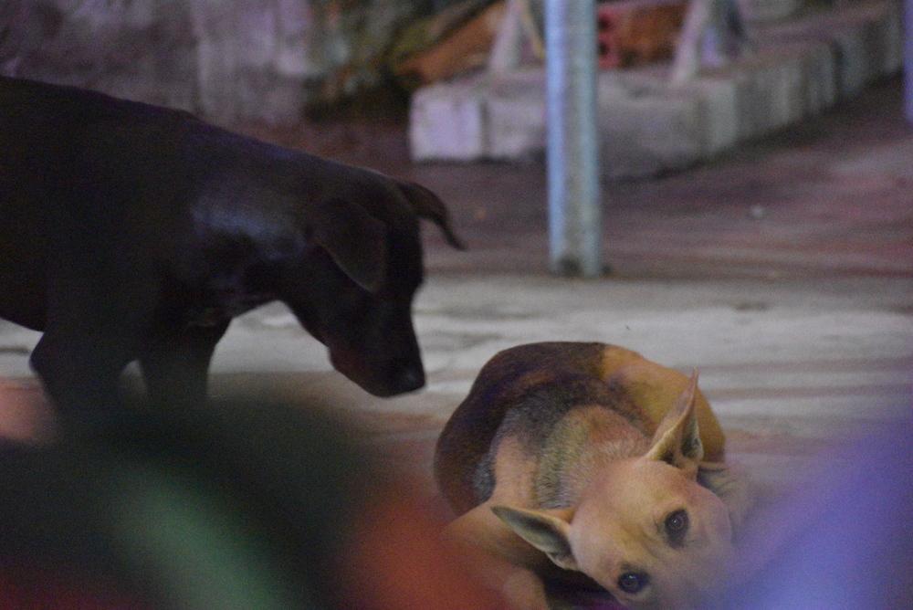 Cambodia has dogs on every corner.