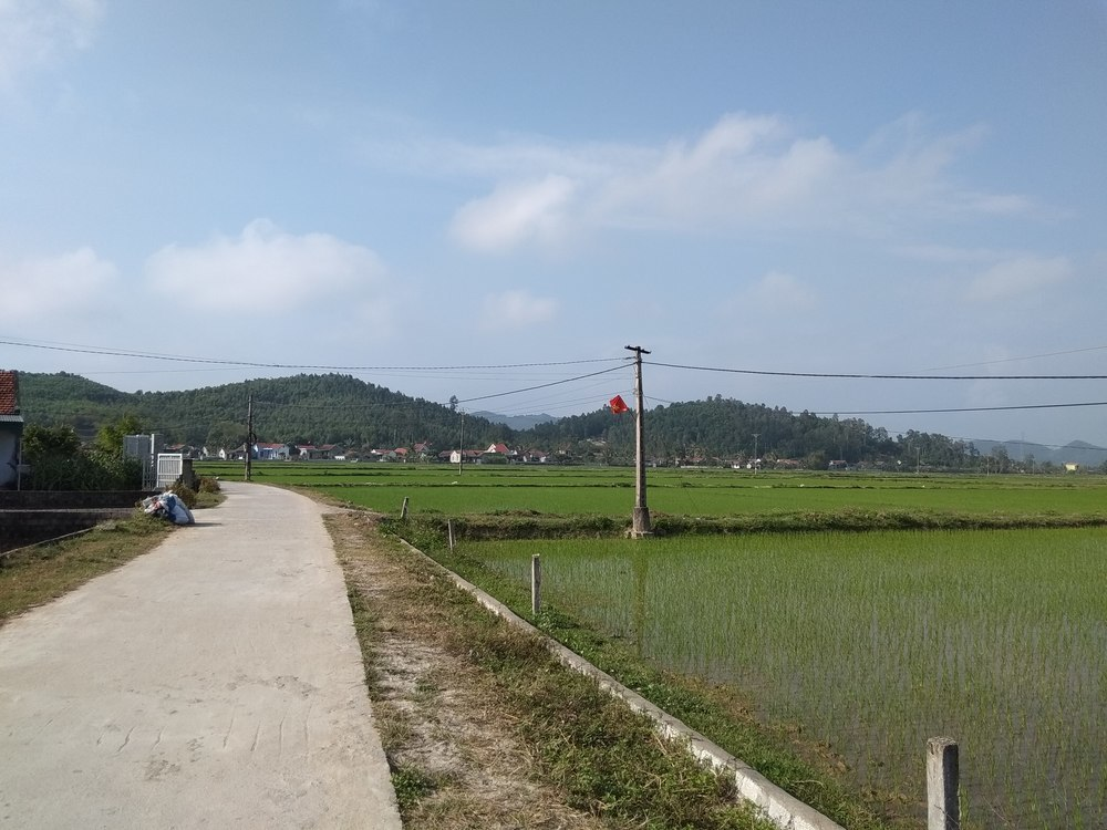 Rice fields in Cau Giat