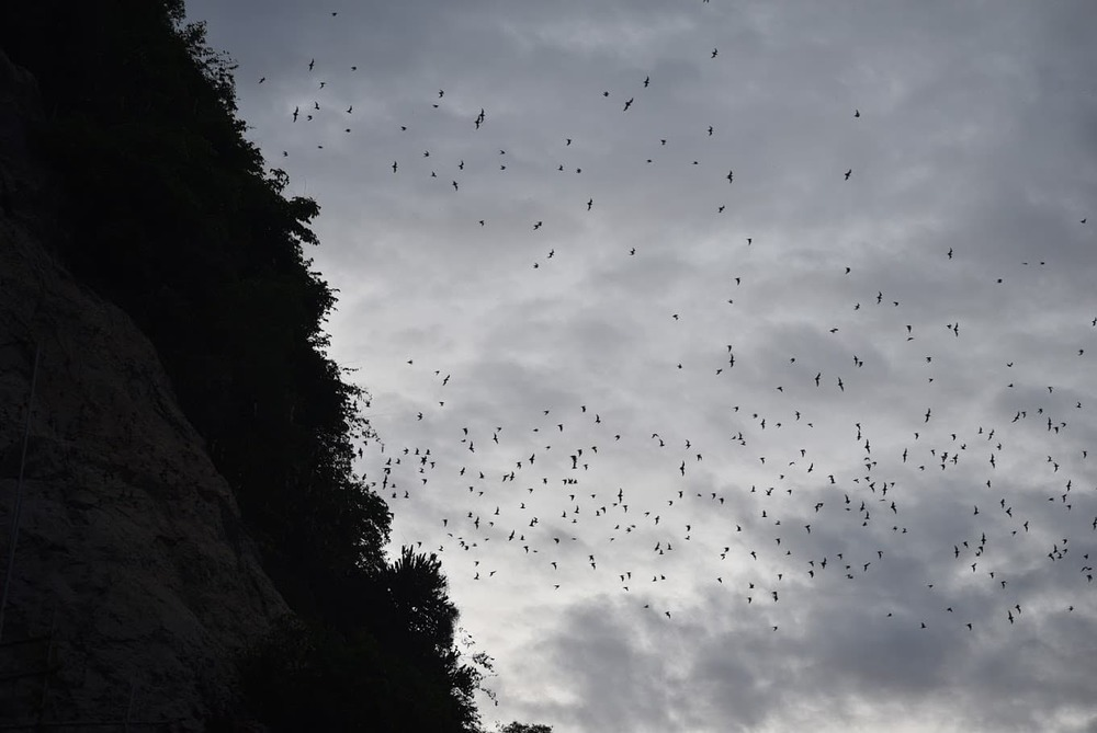 Bats ready for the hunt, bursting out from the Bat Caves.