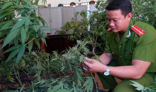 Cannabis laws in Vietnam are very strict on paper, but the implementation is not!