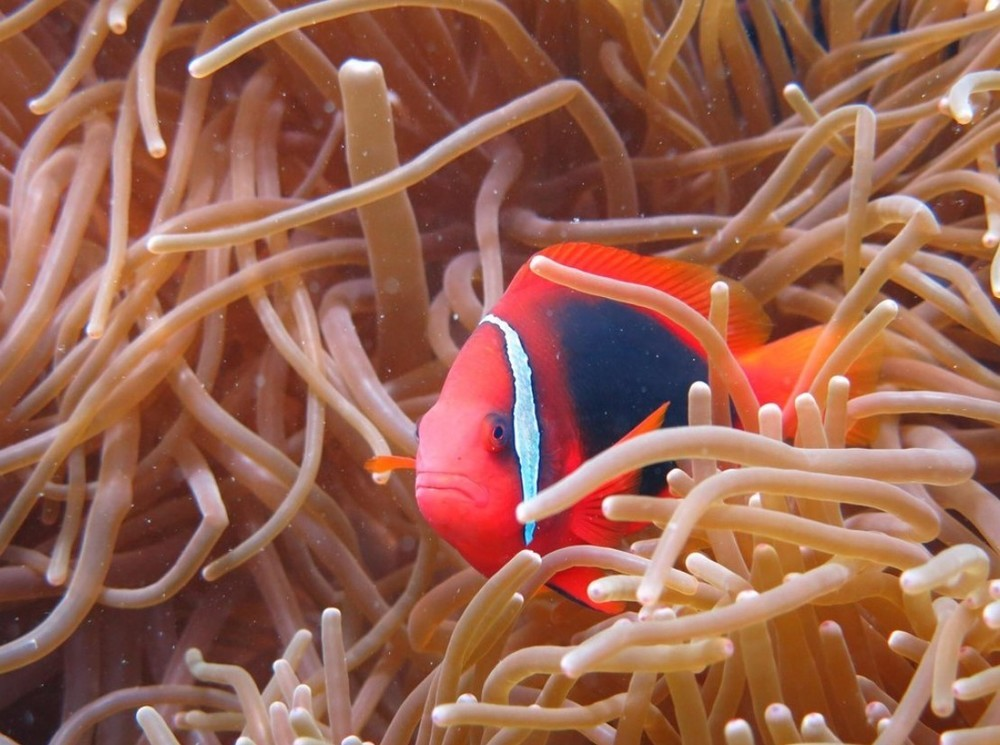 Finding the Nemo