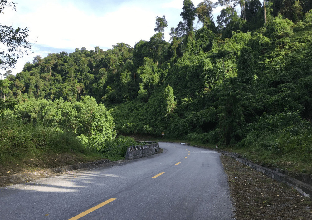 Road and surrounding nature