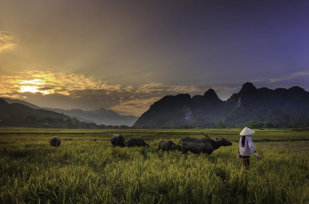 Vietnam Souvenir, Non La Hat