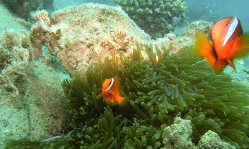 One more Nemo