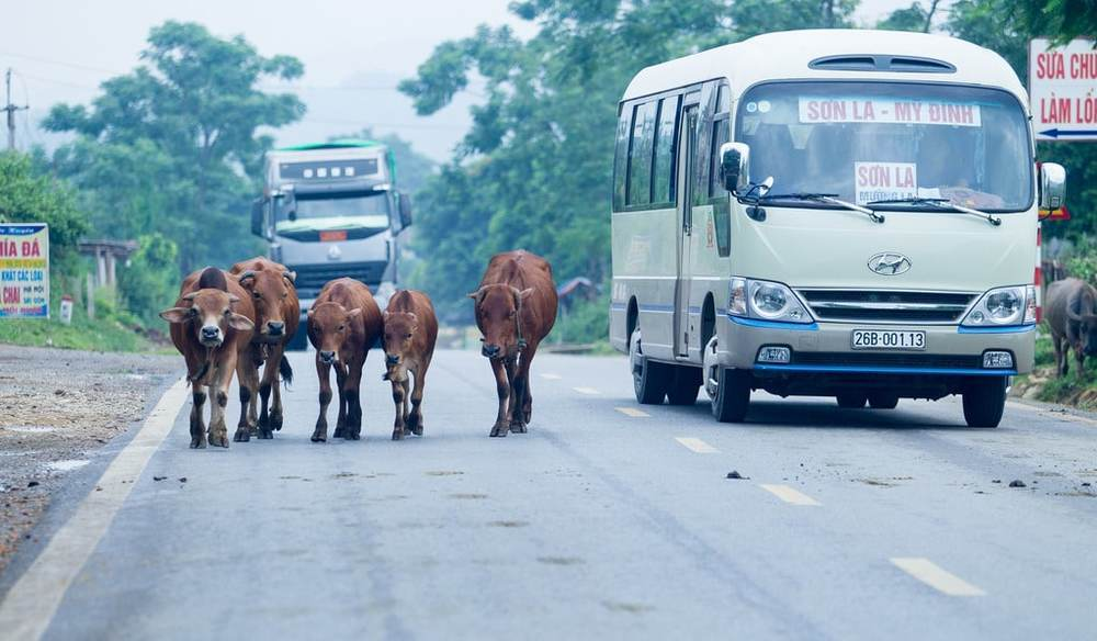 Minibus can take you along some rural routes in Vietnam that aren't covered by the public bus services.